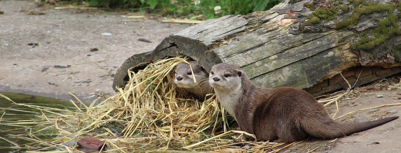 Zoo & Wildlife Parks